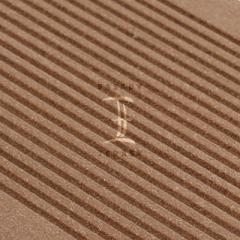 WPC terasy - terasová prkna wpc Silvadec - plný profil - WPC prkna Silvadec Classic - odstín světle hnědá